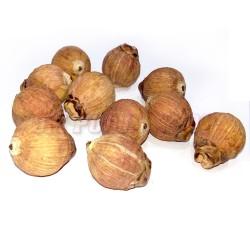 Betelnut, Coconut