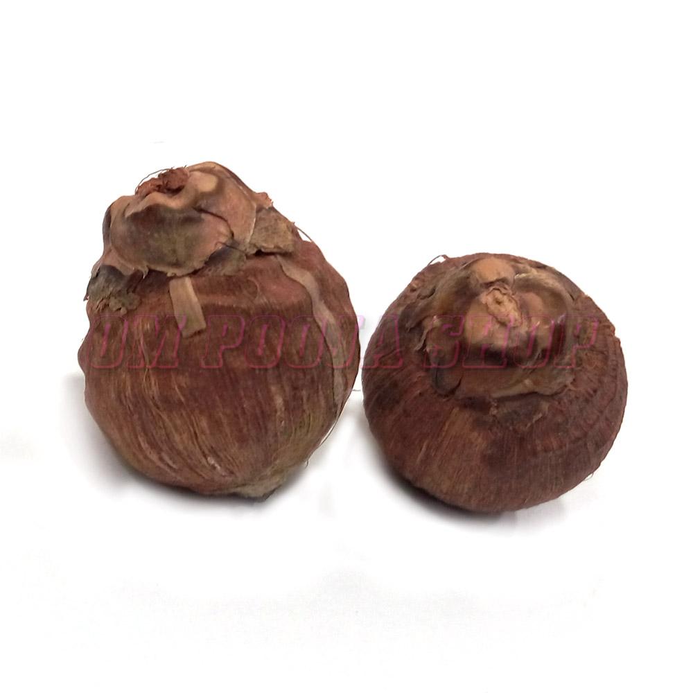 Laghu Nariyal (Small Coconut)